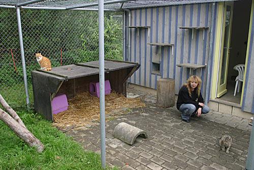 Haus für erwachsene, vermittelbare Katzen